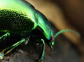 Green Beetle by Hector42