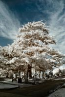 Malvern Infrared by Dave-Ellis