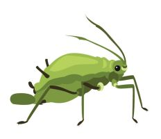 Day 62: Aphid by ysyra