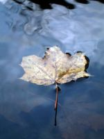 Leaf on Glassy Blue Water by SweetSoulSister