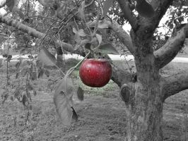 Apple by Missywoot1124
