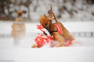 Snow-Coursing 2 by Wolfruede