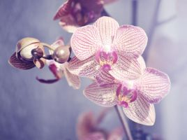 orchidee by Nigrita