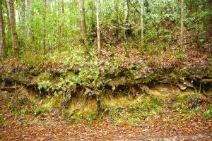 2014-gheerulla-forest-erosion-cliff by tbg-stock-images