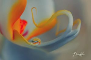 Pure white droplet by diensilver