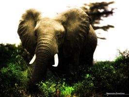 Elephant.Manipulation by omarlinux