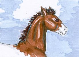 Pinto Horse ATC by calzephyr