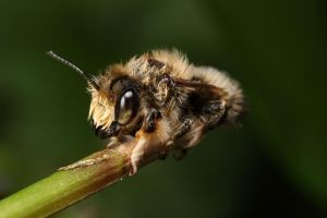 Wet solitary bee series_5 by macrojunkie