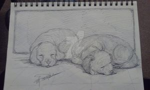 Cute pups drawn in ink by PatrickOlsen