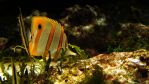 Aquatic Background 02 by ALP-Stock