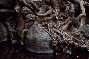 Roots by Ifispirit