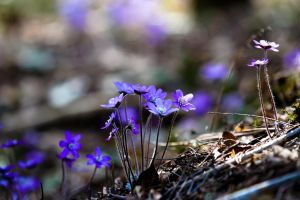 Spring flowers by BIREL
