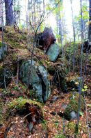 Stones, wood by Hudojnica