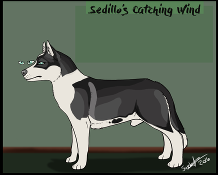 Sedillo's Catching Wind by swankie