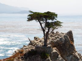Lone Cypress by secondclaw