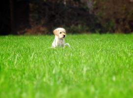 Little Sara in big world by Andenne
