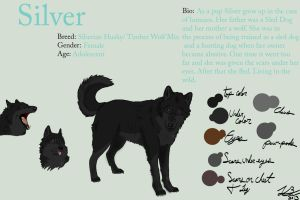 Silver: Reference sheet by SilverWolf7444