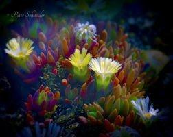 From the beautiful world of plant (XII). by Phototubby