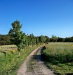 Path in the Field by philippeL