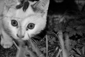 My neighbours cat by zeynepirene
