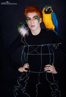 Parrot Fashion I by Kimberly-M