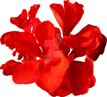 Red Flower PNG - Exclusive by Thy-Darkest-Hour