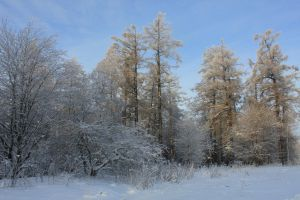 Frost and sun2 by Hudojnica