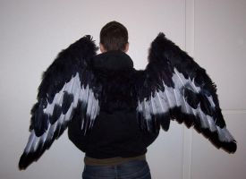 grey and black gryphon wings by ScruffyAlleyCat
