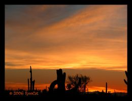 Oranges Winter Saguaro Sunset by RooCat