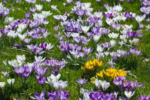 Springtime in Wuppertal II by Sockrattes