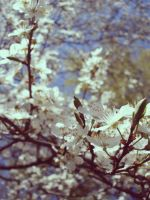 spring is coming 2 by untitled55