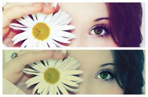 Daisy Eye by KayleighBPhotography
