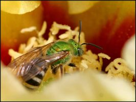 Green Bee by fl8us