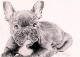 French Bulldog by Venilia