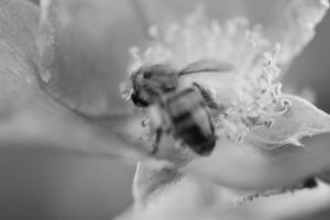 eating wasp by mortenthoms