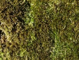 mossy texture_1 by super-chicken-stock