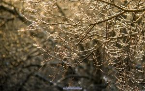 Natures Bling Bling by joerayphoto