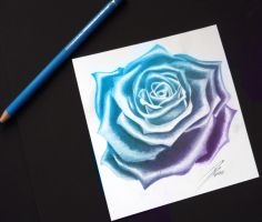 Blue Rose by davepinsker