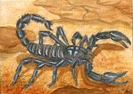 Black scorpion (ACEO) by Woodswallow