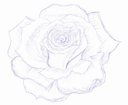 Rose- pen art by Jay-JayB