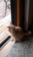 Looking out the door! by MyLoveForYouEternity