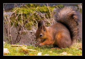 Squirrel I by Creepling