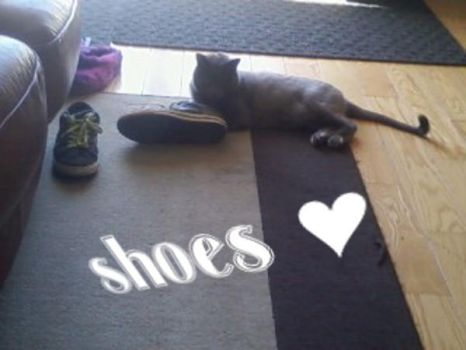 cat has my shoe by WhenWereHoldingHands
