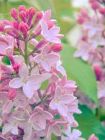 Vintage Spring 2 by barefootphotos