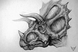 Triceratops by Mattermorfer