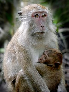 Cling to Mom by TMRE