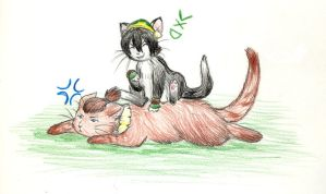 Tokka Kitties by Porcubird
