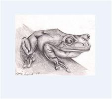 frog miniature drawing by carriephlyons