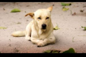 Dog chilling in Indonesia by Yabbus23