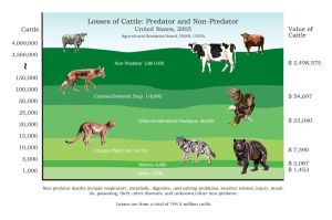 Cattle Predation Graph by Wolf-Daughter